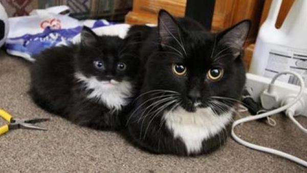 Wygląda jak mama! 14 kociąt, które są miniaturową wersją swoich rodziców. 7...