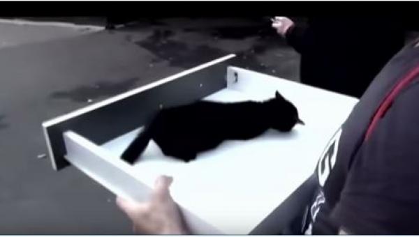 Ten kotek dosłownie płakał z bólu umierając na rosyjskiej ulicy. Na szczęście...
