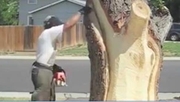 Kazali mu wyciąć drzewo sprzed domu, ale postanowił trochę inaczej...