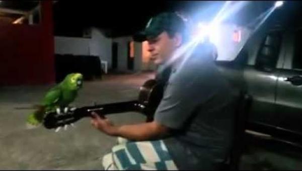 To nagranie śpiewającej papugi robi furorę w sieci. Musicie to zobaczyć!
