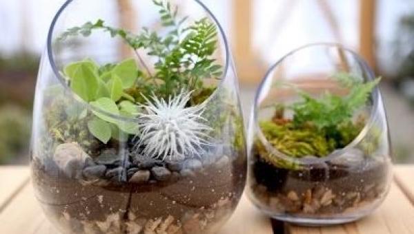 Ten instruktaż jak zrobić własny ogródek-terrarium jest wyjątkowo prosty, a...