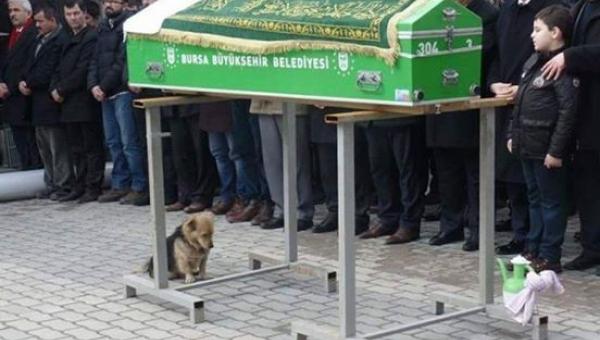 Ten pies usiadł przy trumnie z bardzo smutnym wyrazem oczu... Nikt się nie...