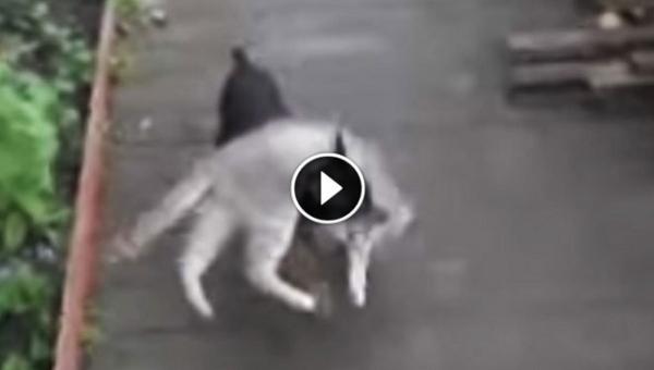 Kobieta prosi psa, żeby poszedł po kota. Efekt? Nie możemy przestać się śmiać!