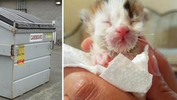 Kiedy ta kobieta znalazła nowo narodzonego kotka na śmietniku nie spodziewała...