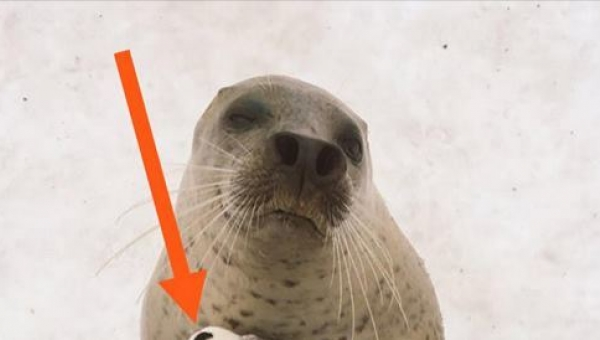 Zwiedzający zoo nie mieli pojęcia co trzyma foka. Kiedy w końcu zauważyli do...
