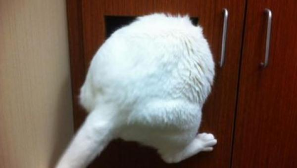 12 kotów chowających się u weterynarza. Numer 5 rozbawił nas do łez!