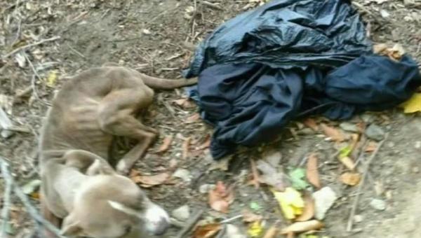 Kobieta znalazła psa w śmietniku, to kto okazał się jego właścicielem...