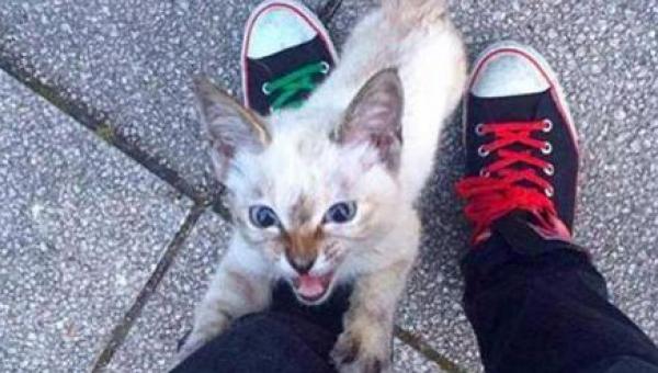 Ten bezdomny kociak podbiegł do mężczyzny i nie chciał go opuścić - mamy łzy...
