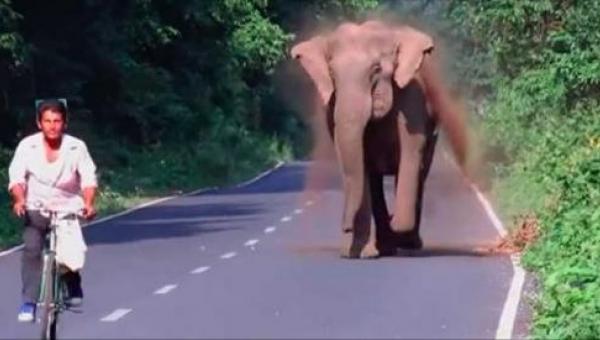 Słoń goni rowerzystę, ale poczekaj aż zobaczysz dlaczego - niesamowite!