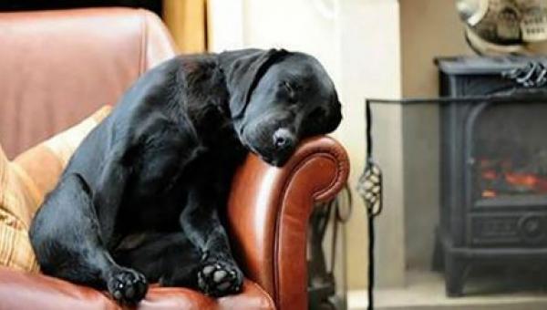 Mężczyzna adoptował psa, a wraz z nim dostał list od poprzedniego właściciela...