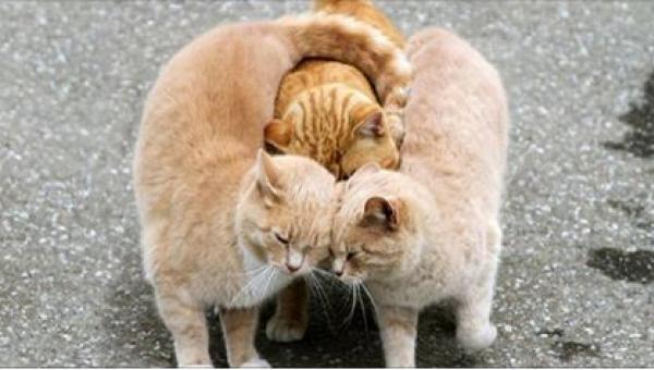 20 zdjęć zwierząt, które pokazują, że miłość dopadnie każdego... Zdjęcie nr...