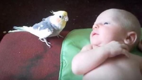 Rodzice obawiali się konfrontacji pomiędzy domową papugą i ich noworodkiem....