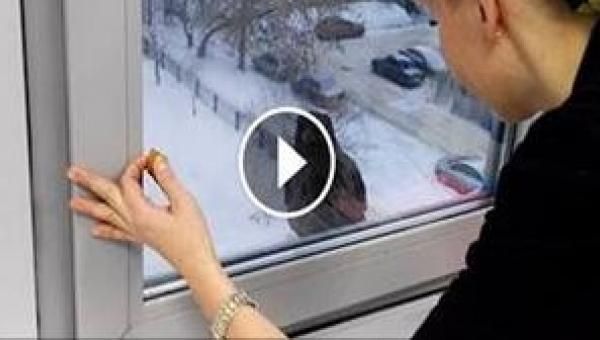 To, co zrobił ten ptak po tym, jak otworzyła mu okno, jest komiczne!