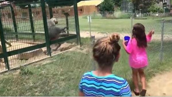 Natrętne dziewczynki w zoo kontra wściekły pawian... To musiało się tak...