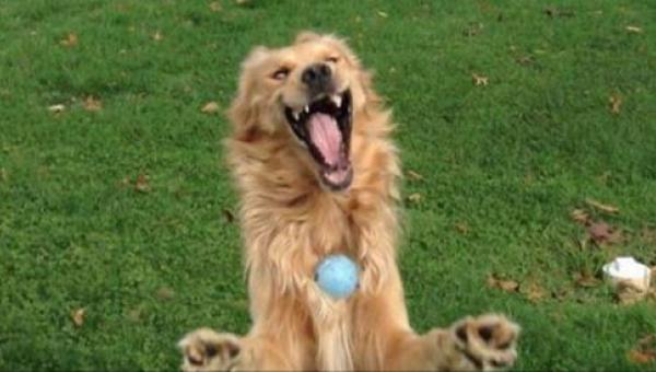 12 psów uchwyconych w niezręcznych momentach. Nie da się ich nie kochać -...