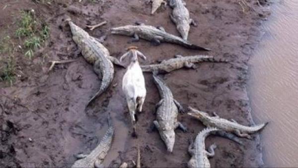 15 zdjęć, które świadczą o tym, że zwierzęta nie wiedzą, co to wstyd,...
