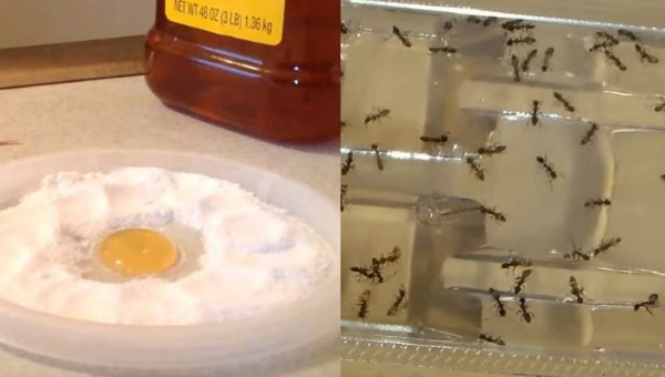 Nigdy więcej prusaków, pcheł i mrówek w domu, wystarczy ten jeden prosty...