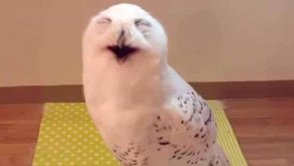 Słyszeliście kiedyś śmiech sowy? Brzmi... Zresztą, posłuchajcie sami