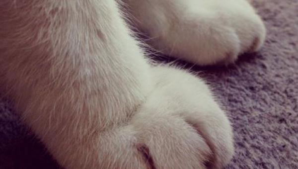 Po obejrzeniu tych 15 zdjęć nigdy nie zdecydujesz się na kota!