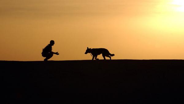 Kopnął psa nieznajomej dziewczyny. Nie wiedział, że to zmieni całe jego życie.