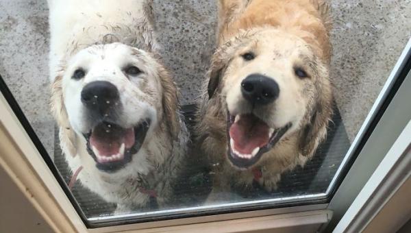 12 psów, które wznoszą kąpiel błotną na nowe poziomy - numer 8 rozbawił nas...