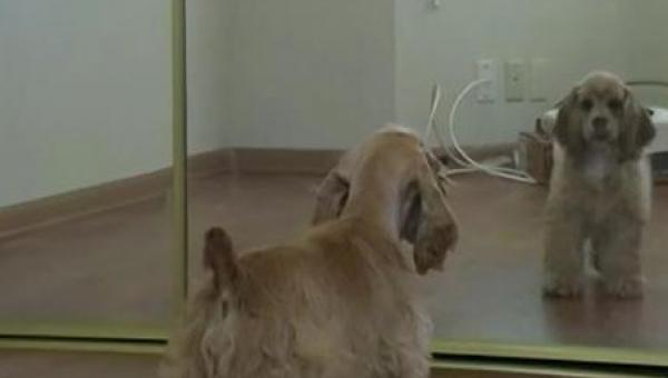 Niepewnie zbliżył się do lustra, a potem zrobił ostatnią rzecz, o jaką...
