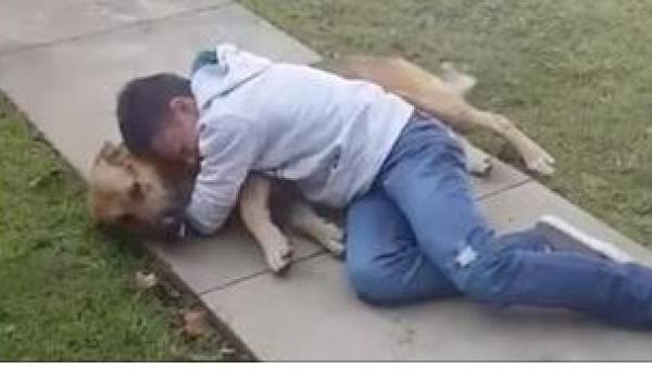 Pies 11-letniego chłopca zaginął na 8 miesięcy. Jego reakcja, gdy psiak...