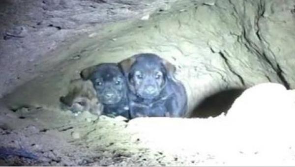 Mężczyzna zauważył 8 szczeniaków w podziemnej norze - po chwili odkrył coś...