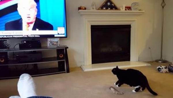 Kiedy zobaczyliśmy reakcję tego kota na występ Donalda Trumpa popłakaliśmy...