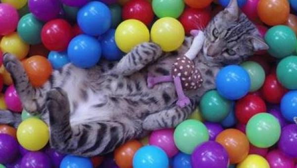 Najlepsze wideo tygodnia - kot, który nie posiada się z radości nad swoim...