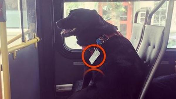 Pasażerowie byli oburzeni na widok psa samego w autobusie, dopóki nie...