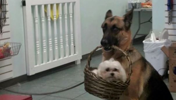 Ci właściciele sfotografowali najdziwniejsze zachowania swoich psów - a my...