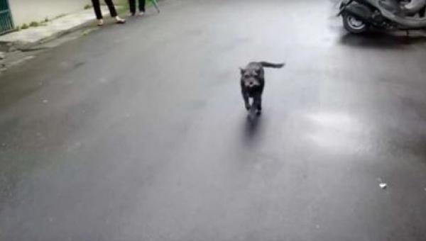 Pies zaginął na 6 dni - jego reakcja na widok właściciela sprawi, że zmięknie...