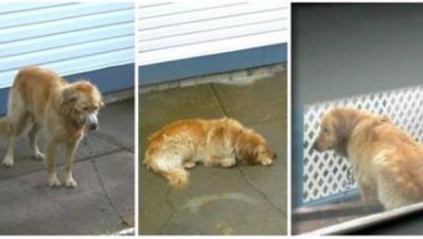 Nikt nie odważył się pomóc psu maltretowanemu przez swoich właścicieli, ale...