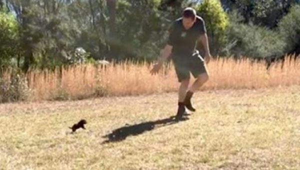 Mężczyzna ucieka przed małym diabłem tasmańskim - zobaczcie co dzieje się...
