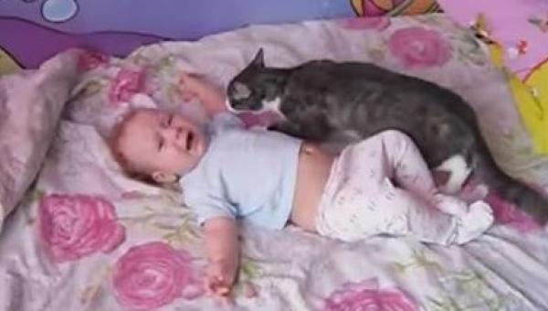 Dziecko zaczyna płakać - reakcja tego kota Was zaskoczy!