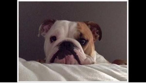 Ten pies pierwszy raz od czasu adopcji miał zostać sam. Zobaczcie, co zrobili...