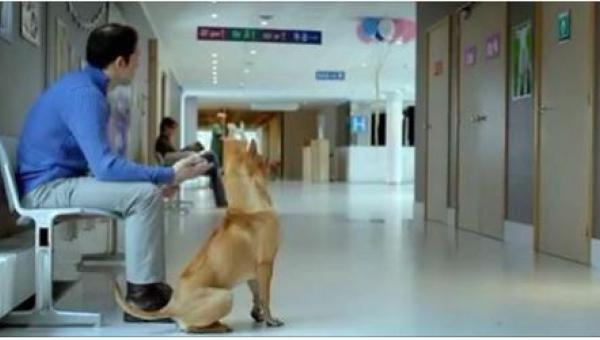 Pies i jego pan cierpliwie czekają w szpitalu pod drzwiami sali porodowej. To...