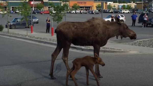 Kiedy klienci centrum handlowego zauważyli na parkingu klępę, nie spodziewali...