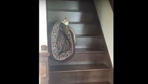 Kot zdecydował, że czas iść spać. To co robi gdy odkrywa, że jego posłanie...