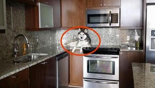 Właściciel zauważył, że jego pies dziwnie się zachowuje. Kiedy przyjrzał mu...