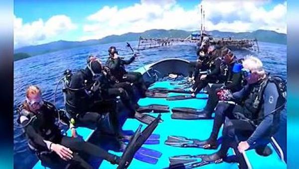 Rekiny zaplątały się w sieć rybacką. 8 odważnych nurków zdecydowało się im...