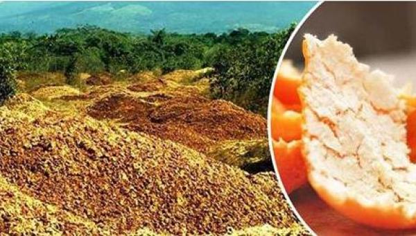 Wyrzucają tysiące ton skórek od pomarańczy w puszczy. 16 lat później świat...