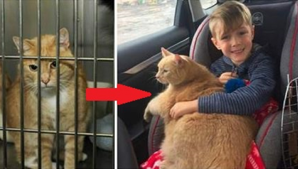 Chłopiec poszedł z mamą do schroniska. Jego wybór podbił serca tysięcy...