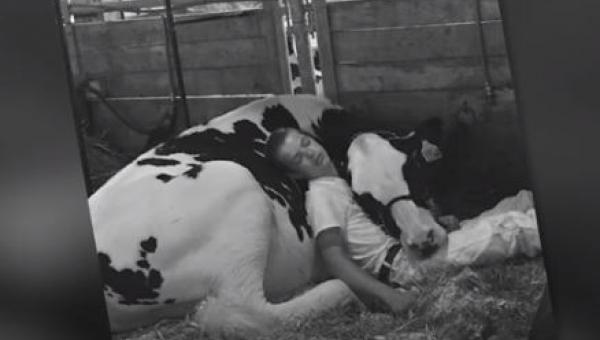 Chłopiec od małego wychowuje swoją krowę. Zdjęcie obrazujące ich więź podbiło...
