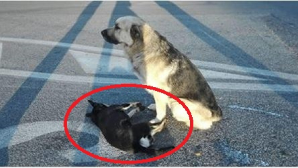 Przyjaźń tych dwóch psów wywołała łzy wzruszenia u tysięcy ludzi z całego...