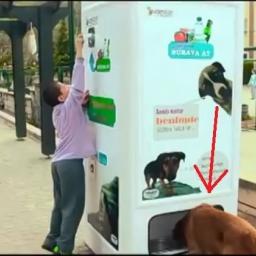 Automat który dokarnia bezpańskie psy. Genialny pomysł