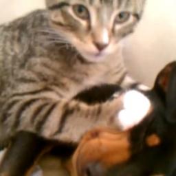 Chory pies wrócił od weterynarza, wtedy ten kot zrobił coś niesamowitego!