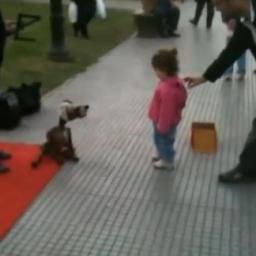 Dziewczynka podeszła do artysty ulicznego, a wtedy jego pies zrobił coś pięknego