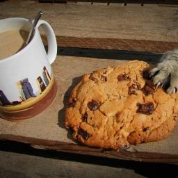 Kot postanowił ukraść ciasteczko, gdy zobaczysz pozostałe zdjęcia padniesz ze śm